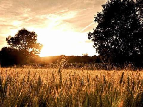 Оценка земельных участков сельхозназначения